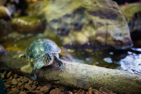 cute turtles on the tree in the aquarium Stock Photo