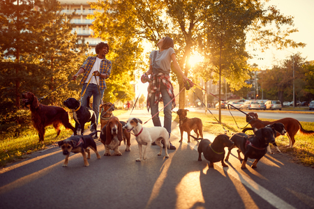 Happy girl and man dog walker with dogs enjoying in walk outdoors. Stock Photo