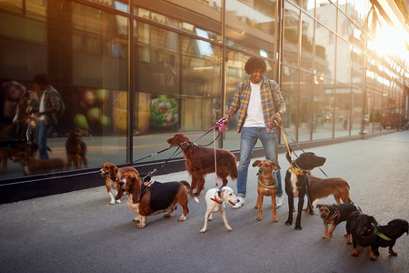 Dog walker enjoying with group dogs while walking outdoors