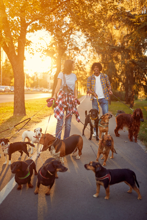 Girl and man dog walker walking with a group dogs in the park Imagens