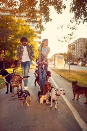 A group of dogs in the city walking with happy couple