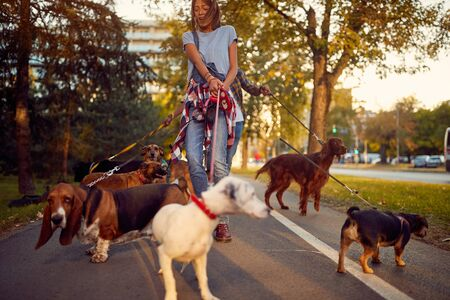 Happy woman dog walker with dogs enjoying in walk city.