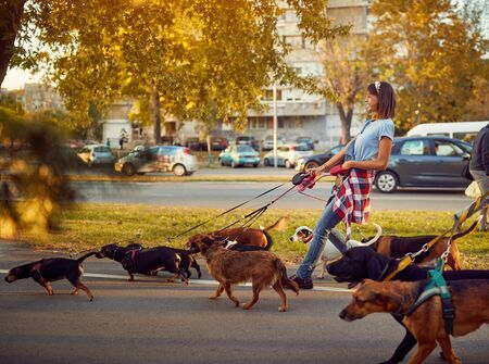 Smiling girl dog walker with dogs enjoying in walk city. Imagens