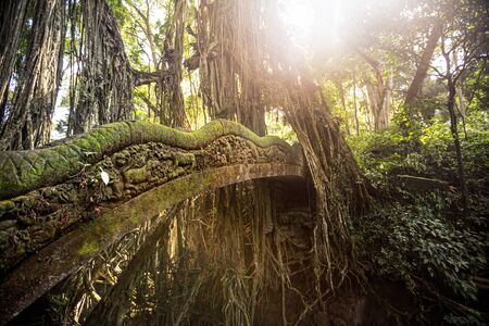 beautiful old bridge in Sacred Monkey Forest with moss in rainforest