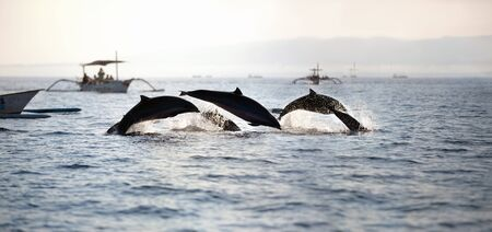 A group of gleeful dolphins swimming together