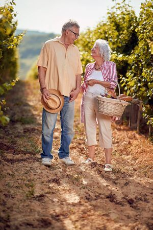 Smiling senior man and woman gather harvest grapes in vineyard