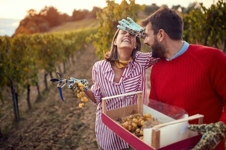 Harvesters grape. Smiling young couple in vineyard. Stock Photo