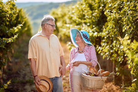 Wine and grapes. Harvesting grapes. Smiling senior man and woman gather harvest grapes in vineyard Stock Photo
