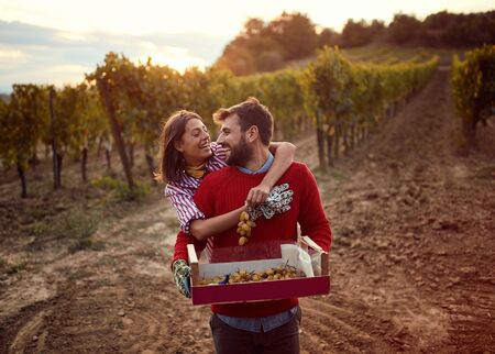 Vines in a vineyard in autumn. Harvesting grapes. Happy young couple harvesting grapes