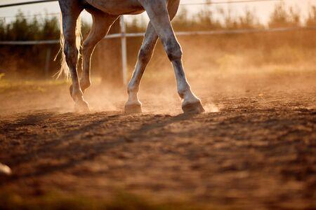 establos al aire libre con pezuña de pie de caballo