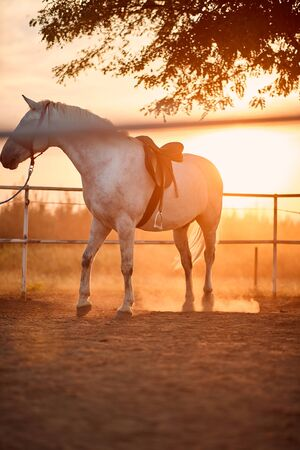beautiful horse on a farm. White horse at autumn farm. Stock Photo