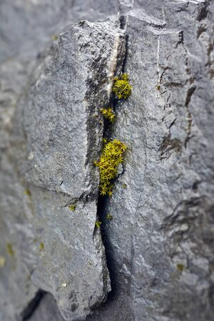 Small green plant is growing on crack stone wall background