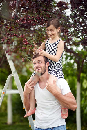 Father helping daughter to pick the cherries from the tree in the garden