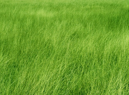 Green Grass Meadow  Stock Photo