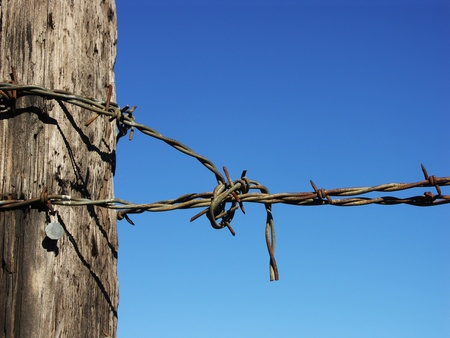 wire fence: Barbed wire on fence