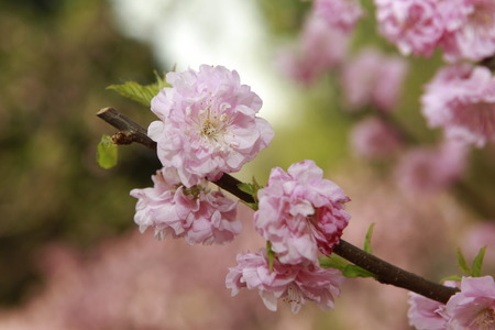 Closeup of pink flowers Stock Photo