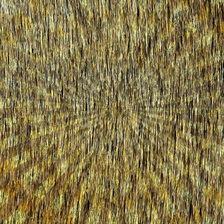 Abstract Background  Golden Starburst  Vector eps10 Stock Vector - 18633590