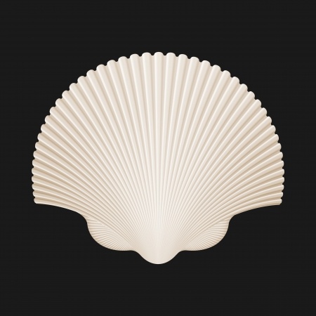 scallops: Brown Scallop Shell  Isolated On Black  Vector Illustration Illustration