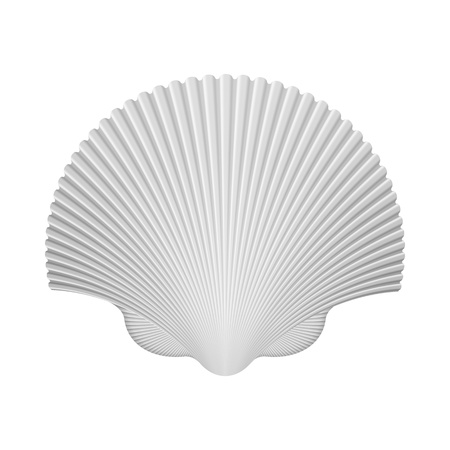 Scallop Shell  Isolated On White  Vector Illustration