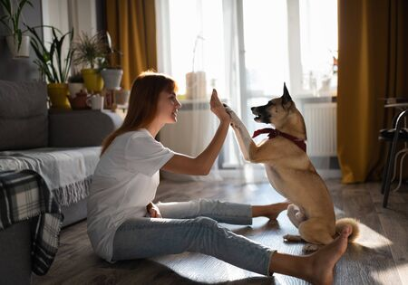 Dog owner teaching her pet at home 写真素材