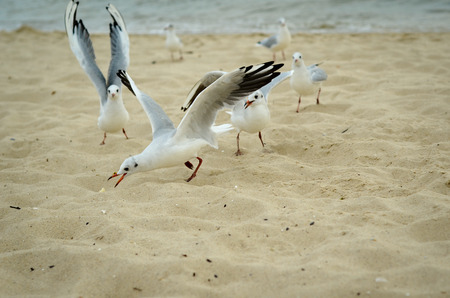 Seagulls are fighting for a piece of bread on the coast. Black Sea. Stock Photo