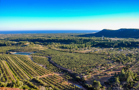 seaboard: Aerial view of olive groves with sea and mountain on the horizon. Typical countryside of Mediterranean seaboard. Mont-Roig del Camp, Catalonia (Spain). Stock Photo