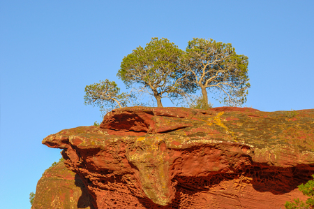 pine three: Three pine trees growing on top of red rock over blue sky. Catalonia, Spain.