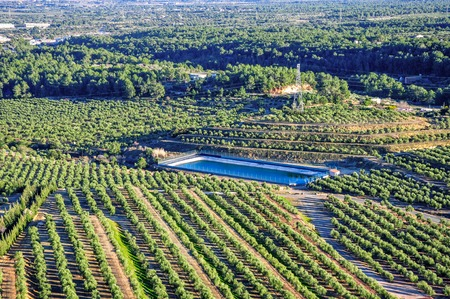 olive groves: Aerial view of olive groves with water reservoir. Mont-Roig del Camp, Catalonia (Spain).