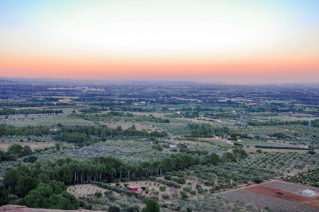 seaboard: Aerial view of olive groves at sunset. Typical countryside of Mediterranean seaboard. Mont-Roig del Camp, Catalonia (Spain).