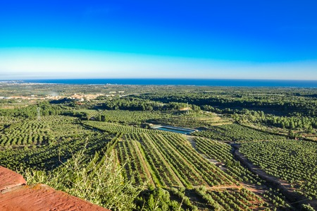 seaboard: Aerial view of olive groves with sea on the horizon. Typical countryside of Mediterranean seaboard. Mont-Roig del Camp, Catalonia (Spain).