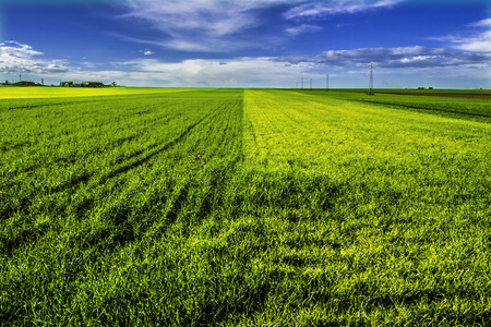 foggia: Field green and yellow Stock Photo