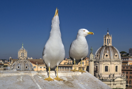 Seagull in Rome screaming to th sky. Altar of the Fatherland.