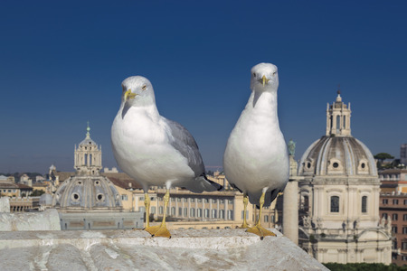 altar of fatherland: Two seagull in Rome - Altar of Fatherland - Monuments. Stock Photo