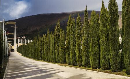 foggia: A way to church in San Giovanni Rotondo with cypress.