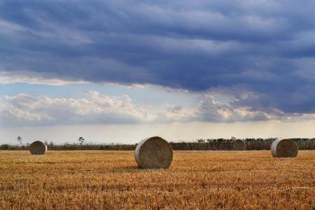 hay field: Clouds on hay field