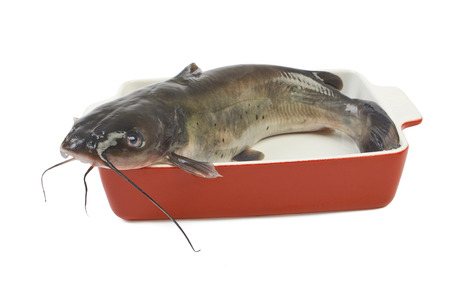 Channel catfish in a ceramic baking dish cooking isolated on white background photo