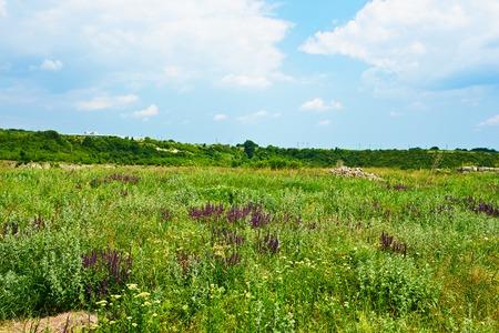landscape flowers: Landscape Spring field of purple flowers in Bulgaria