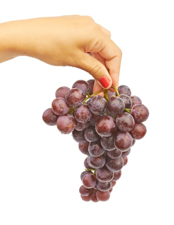 Big bunch of blue grapes in a female tanned hand on white background isolated Stock Photo