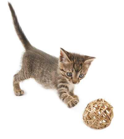 pampered: Kitten and a ball of straw on a white background