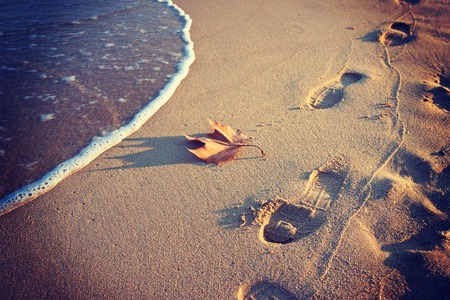 footprint sand: Footprints in the sand and dry autumn leaves