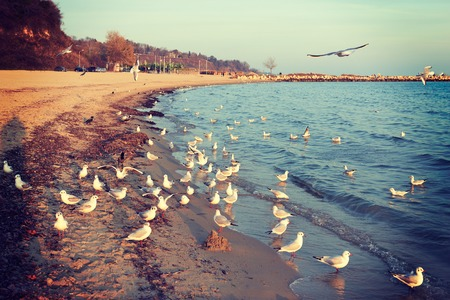 turmoil: Birds seagulls on the shore of the Black Sea in Bulgaria