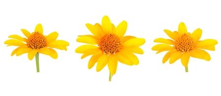 Set of Yellow gerbera flower. Isolated on white Stockfoto