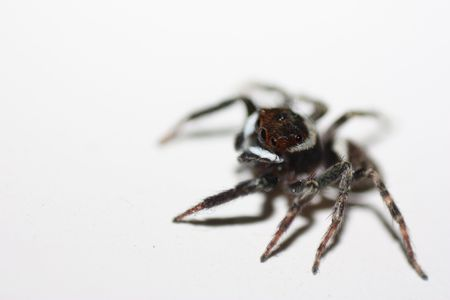 Jumping spider. photo