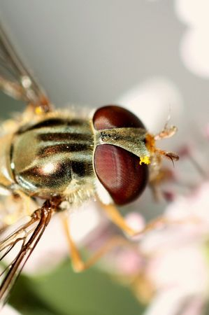 hover: Hover bee macro