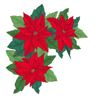 Christmas frame made of bright red poinsettia. Floral winter decoration. Vector objects on white background.