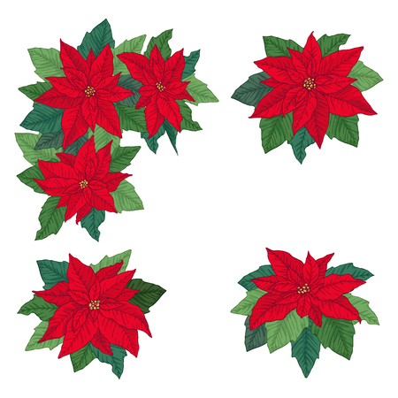 Christmas set with bright red poinsettia, isolated on white background. Design element for Christmas decoration. Vector illustration