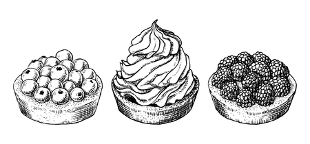 Set of delicious hand drawn creamy biscuit and tarts with berries. Engraving style pen pencil painting retro vintage vector lineart illustration on white background. Collection of sweet desserts.