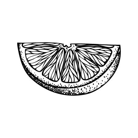 Fruit illustration with Orange slice in engraving stile. Sweet and fresh fruit element for menu, greeting cards, wrapping paper, cosmetics packaging, labels, tags, posters etc