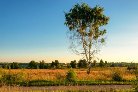 lonely tree: Lonely tree in the field under the blue sky. Stock Photo