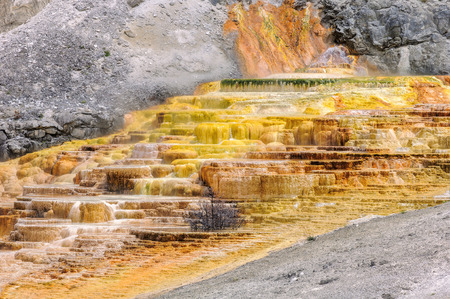 travertine: Yellowstone,  Travertine Terrace, Mammoth Hot Springs